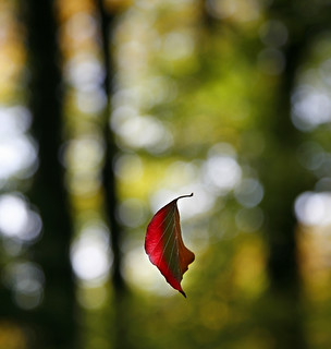 I be-leaf in believing  . . .