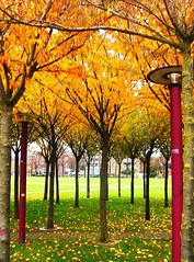 Autumn in Amsterdam (Darwin Bell) Tags: autumn fab orange fall amsterdam soe 10faves 25faves mywinners abigfave msh0908 anawesomeshot aplusphoto ultimateshot superbmasterpiece diamondclassphotographer annemakaske colourartaward msh090813