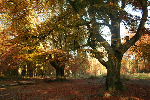 Savernake Forest 102