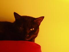 Moody Pixie