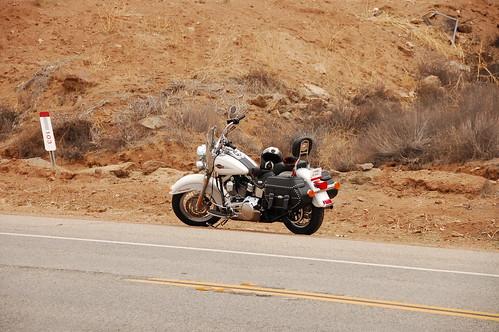 La blanquita en su primer desierto