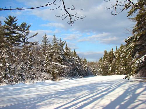 Fresh Snow on the Pond