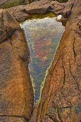 tidal pool (TheForma) Tags: water pool rock maine tidal acadia acadianationalpark algea