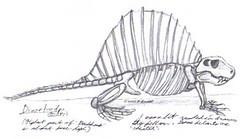 HMNH 1/29/08 - Dimetrodon