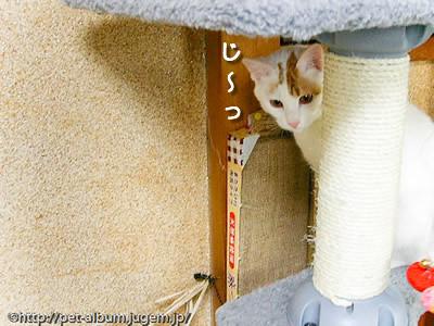 ミア(猫)の写真9