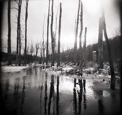 RIVER OF DECEIT (Buck Lewis) Tags: blackandwhite bw 120 film forest holga ilford thephotoholic buttercupsanctuary