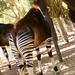San Diego Zoo 022