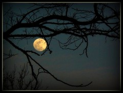 Moon (Canicuss) Tags: blue sky moon tree night branch branches fullmoon nighttime lunar thebestofday gnneniyisi canicuss