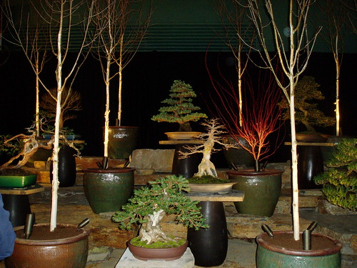 Illuminated Birches and Bonsai