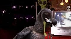 14 Dodo meets remote control