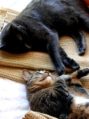 Whiskey & Ginger (Nick Leonard) Tags: cats pets cute animals ginger adorable whiskey felines layingdown nickleonard