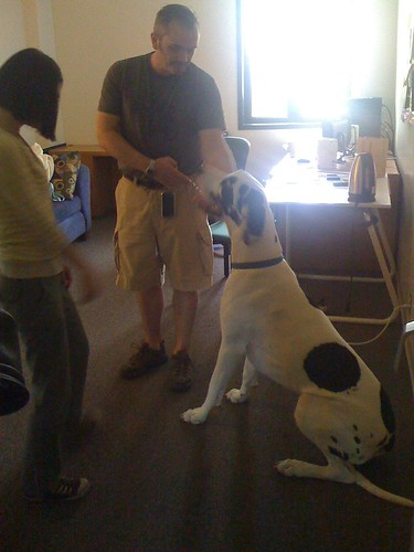 a great Dane in the office... quick, get him some work to do :)