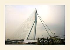 The Erasmus bridge ( nickname Zwaan = Swan) in Rotterdam (dirk huijssoon) Tags: bridge architecture port river swan rotterdam riverside harbour contemporary estuary rhine seaport zwaan nieuwemaas erasmusbridge 5photosaday aplusphoto