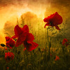Red for Love (Philippe Sainte-Laudy) Tags: flowers red texture nature photoshop bravo warm chapeau poppies ogm themoulinrouge oos 500x500 firstquality coolshot nikond200 laclassenonèacqua alarecherchedutempsperdu avision artlibre 1000faves flickrplatinum infinestyle diamondclassphotographer flickrdiamond megashot bratanesque gwain memoriesbook theunforgettablepictures philippesaintelaudy theperfectphotographer thegardenofzen theroadtoheaven thegoldendreams world100f exploreheaven 240x240 thebestpicturegallery multimegashot thegreatshooter theenchantedcarousel alemdagqualityonlyclub alemdaggoldenaward winner500 awardtree magicdonkeysbest awesomeblossoms topqualityimageonly obq trulyfinebisousxxx atqueartificia vision100 thetempleofaphrodite texturesquared themonalisasmile