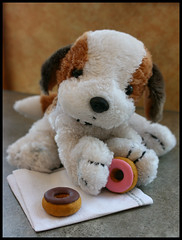 For Someone Special (Cate Partridge Photography) Tags: coffee puppy table toy stuffed strawberry waiting chocolate donuts donut doughnut pup share frosting pupedogg