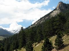 Pines on the Rockies (The Brit_2) Tags: mountains colorado estespark rockymountainnationalpark