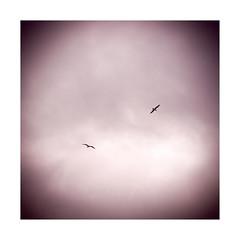 Gaivotas / Seagulls /EXPLORE Feb 9, 2017 #66 (Francisco (PortoPortugal)) Tags: 0322017 20160318fpbo27322 aves birds gaivotas seagulls céu sky nuvens clouds porto portugal portografiaassociaçãofotográficadoporto franciscooliveira