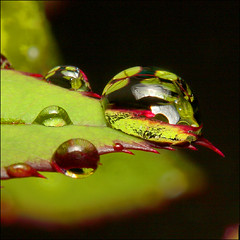 "~ Drip - ""?"" ~ (ViaMoi) Tags: ontario canada color colour macro nature water colors beautiful rain closeup canon photography photo drops colours photographer close natural image ottawa drop clear tamron farbe tamron90mm naturalist naturesfinest blueribbonwinner imagist 430ex supershot ottawacanada flickrsbest masterphotos golddragon mywinners abigfave platinumphoto anawesomeshot colorphotoaward superaplus aplusphoto diamondclassphotographer flickrdiamond citrit canon40d naturewatcher colourartaward excapture betterthangood macrolife viamoi goldstaraward natureselegantshots damniwishidtakenthat flickrlovers 100commentgroup saariysqualitypictures"