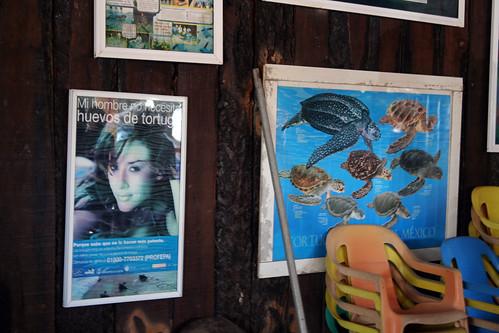 Acapulco - Mi hombre no necisita huevos de tortuga