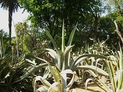 ortobotanico 039 (blum1) Tags: alberi fiori piante ortobotanico