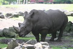 IMG_4711_emmen (Arie van Tilborg) Tags: zoo dieren emmen noorderdierenpark dierentuin mediacollege arievantilborg