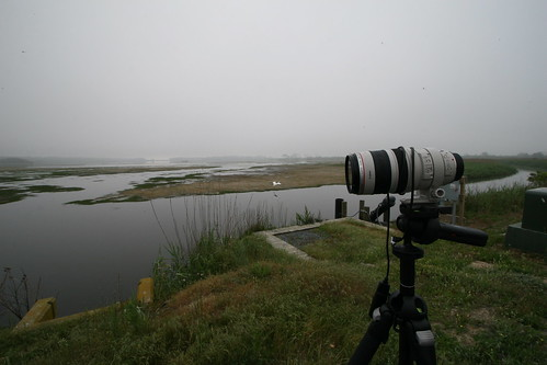 Foggy Chincoteague