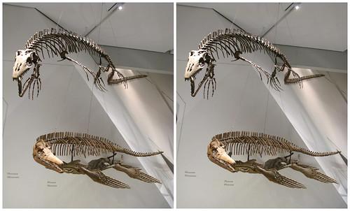 3D Dinosaur 07