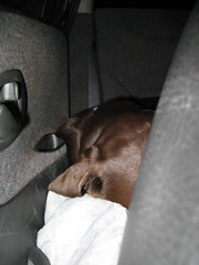 Cheyenne Fast Asleep