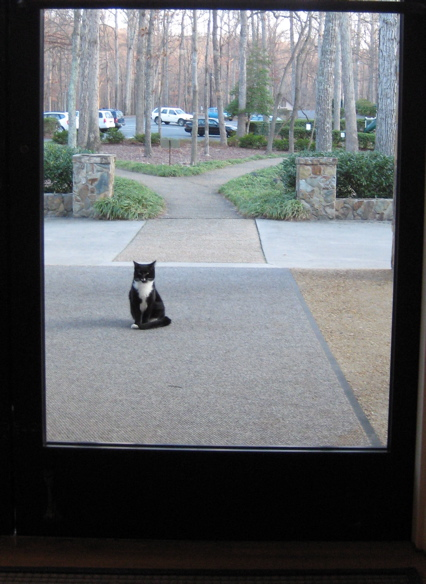 please let me in