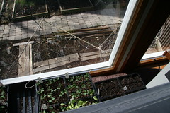 trellis and sprouts