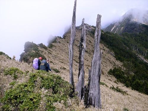出至稜線三根枯木