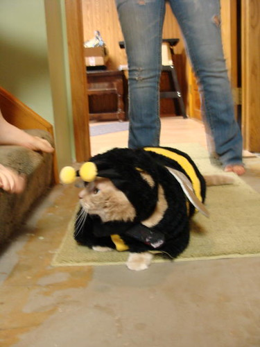 Poor poor pitiful bee.
