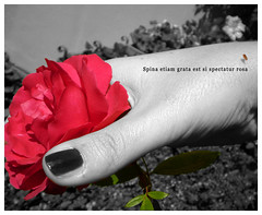 Guardare oltre (Poison*Ivy*in*the*enchanted*garden) Tags: beauty rose pain hand finger rosa mano thorn bellezza terrazzo dito dettaglio dolore spina