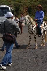 Zebra Vietnam style