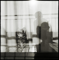 * Tintinnabulum (...cathzilla) Tags: bw window reflections curtain cyprus neko z straycat kibris flexaret clochette tintinnabulum grelot yesagainacat butnotonlyacat zouss thecatwhoturnedonandoff
