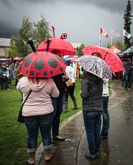 Whistler Beer Festival Bugs, 2016 (stevecarney) Tags: whistler beer festival bugs rainy day canada lady bug british columbia outdoors nature red beatle brew