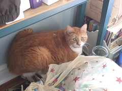 Aiden on my sewing basket