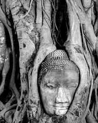One with nature (pranav_seth) Tags: tree thailand buddha roots unescoworldheritagesite ayuthaya budha figtree bodhi ayutthaya blueribbonwinner watmahathat supershot criticismwelcome anawesomeshot goldenphotographer diamondclassphotographer ayuddhia lordbudha smilingbudha