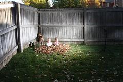 IMG_4326 (Will_V) Tags: wood baby fall leaves leaf twins babies setup strobist