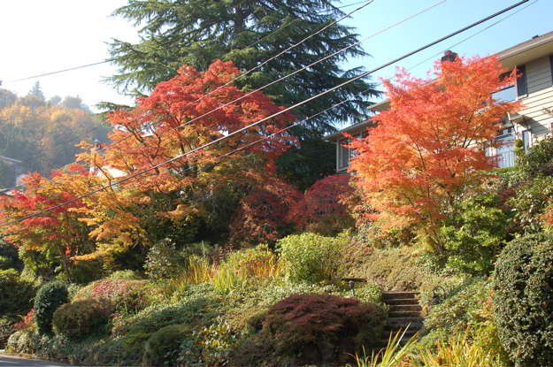 102507_nwh_house_foliage1