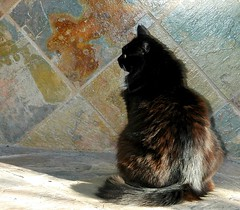 Kitty in Profile from Behind (Shawn's Kitty (Busy Healing!)) Tags: black wall backyard kitty tuxedo slate bestofcats