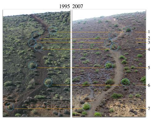 Comparación camino de bajada: 1995-2007