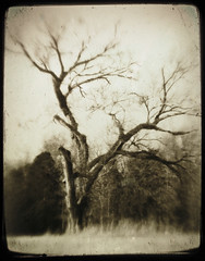 strength through the ages (Jeff Rinehart  (almost back in action)) Tags: park blackandwhite tree monochrome sepia vintage artistic expression military civilwar national faux layers strength battlefield toned shiloh ages lensbabies tinted lensbabyoriginal endure artisticexpression ttv flickrplatinum blackribbonbeauty betterthangood proudshopper jeffrinehart avertedvision