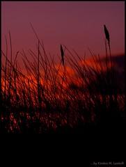 Playfull (Kirsten M Lentoft) Tags: sunset sky beach colours searchthebest silhouettes blueribbonwinner mywinners abigfave colorphotoaward momse2600 isawyoufirst diamondclassphotographer flickrdiamond goodmorningdearesthugs mmmmuuaaaahhhhhhhh noneofthecoloursarenaturelanymorelol kirstenmlentoft