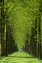 Once a railroad... (beeldmark) Tags: railroad trees holland green netherlands geotagged spring bomen groen nederland lane lente apeldoorn  spoorweg greentunnel k10d theunforgettablepictures tamron18250 beeldmark geo:lat=52224947 geo:lon=5946146