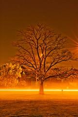 Laser Light Express (Vermin Inc) Tags: road longexposure light mist tree grass night coburg pentax highcontrast melbourne laser discharge lightstreaks macrolens 70mm notcropped surprisefind k10d warmwhitebalance