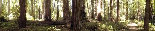 Rockefeller Forest