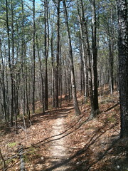 Middlefork trail