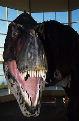 Fort Peck T. Rex