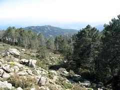 Entre Barba Porca et plaine d'Uovacce :  la partie caillouteuse hors forêt